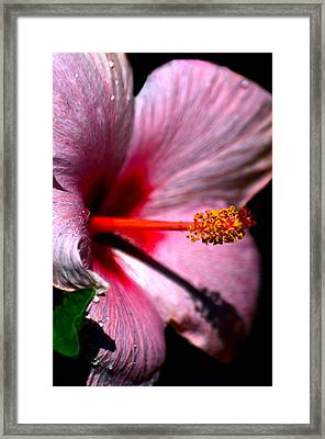 At The Heart Of It Framed Print by Camille Lopez