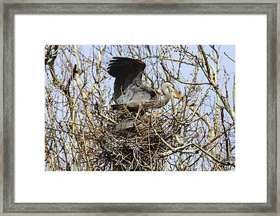 At The Heronry Framed Print by Jill Bell