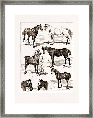 At The Islington Horse Show, London, Uk, 1875 1 Framed Print