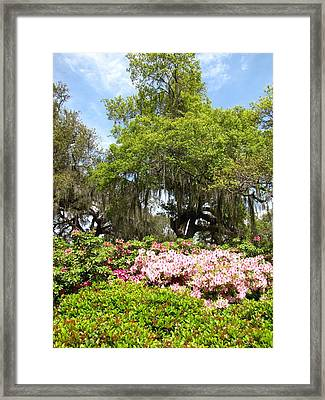 Framed Print featuring the photograph At The Park by Beth Vincent