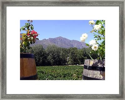 At The Rickety Bridge Winery Framed Print by Barbie Corbett-Newmin
