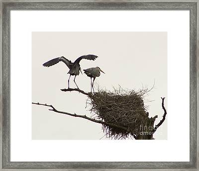 Framed Print featuring the photograph At The Rookery by Alice Mainville