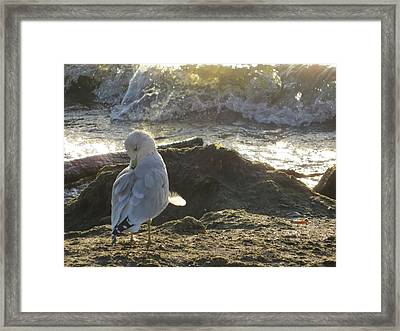 At The Shore Framed Print