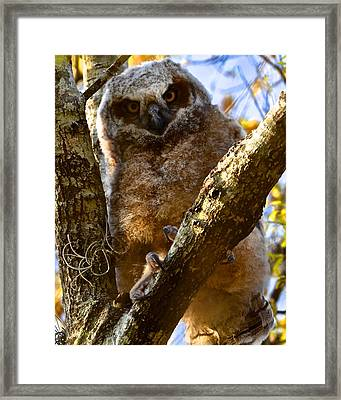 At The Top Framed Print by AnnaJo Vahle