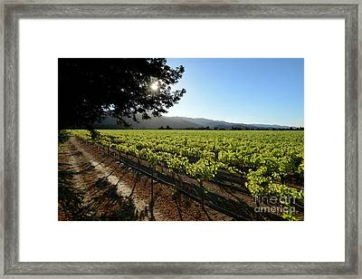 At The Vineyard Framed Print by Jon Neidert
