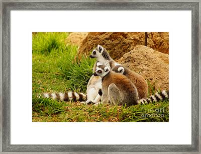 At The Zoo Framed Print by Nur Roy