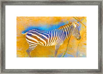 At The Zoo - Zebras Framed Print