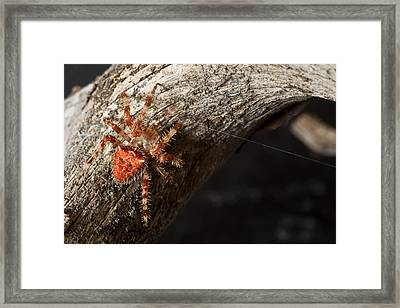 At Work Framed Print by Kiril Kirkov