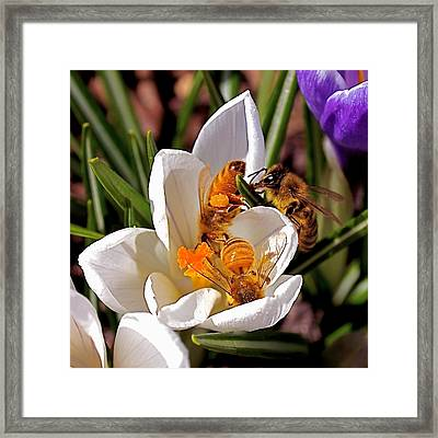 At Work Framed Print by Rona Black