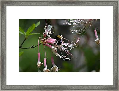 Framed Print featuring the photograph At Work by Tara Potts
