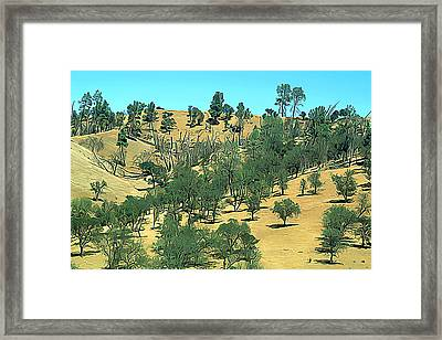 Atascadero Summertime Trees Framed Print by Wernher Krutein