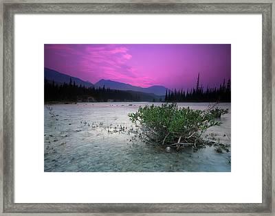 Athabasca River Bush At Sunset Framed Print