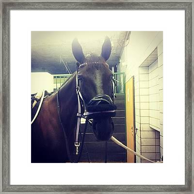 #atinka #horse #pferd #beautiful Framed Print