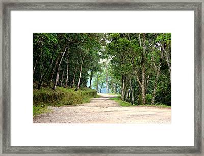 Atlantic Forest Framed Print by Paulo Zerbato