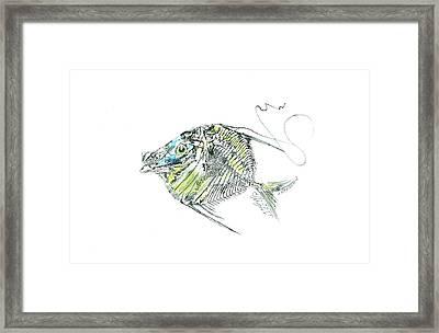 Atlantic Lookdown Fish Against White Background Framed Print