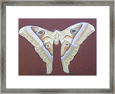 Atlas Moth Framed Print