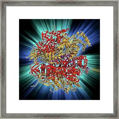 Atpase And Inhibitor Framed Print by Laguna Design