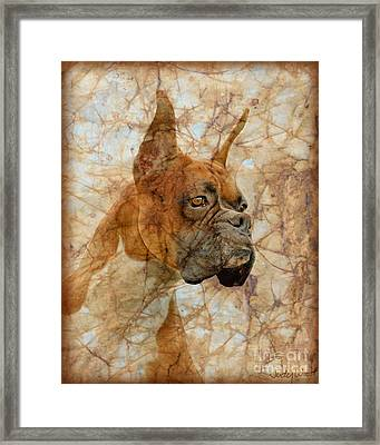 Attention Framed Print by Judy Wood