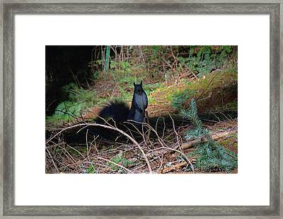 Attention Framed Print