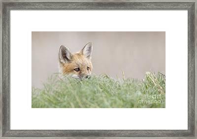 Attentive Framed Print by John Blumenkamp