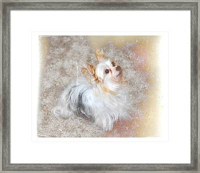 Attentive Framed Print by Mary Timman