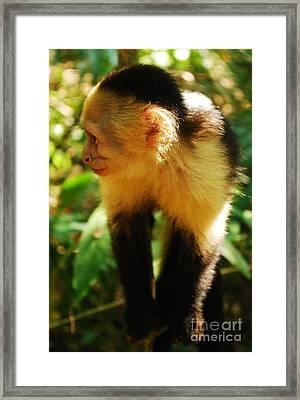 Attentive Framed Print by Susan Hernandez