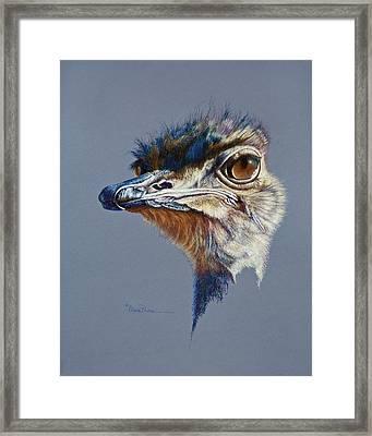 Attitude Aftican Ostrich Framed Print