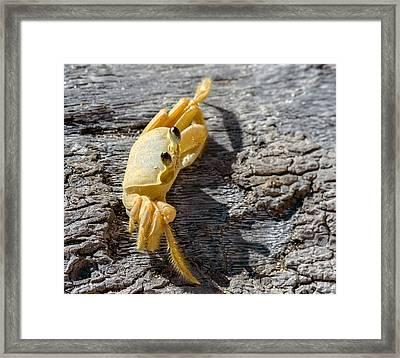 Attitude Framed Print