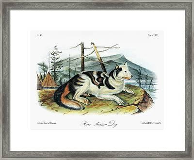 Audubon Dog Framed Print by Granger