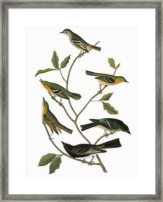 Audubon Flycatchers Framed Print by Granger