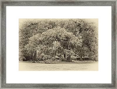 Audubon Park Sepia Framed Print by Steve Harrington