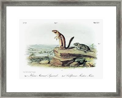 Audubon Squirrel And Vole Framed Print