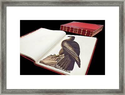 Audubon's The Birds Of America Framed Print by Natural History Museum, London