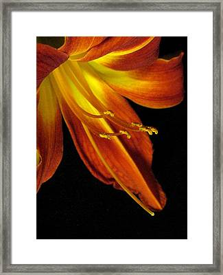 August Flame Glory Framed Print