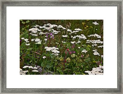 Framed Print featuring the photograph August Flowers by Jeremy Rhoades