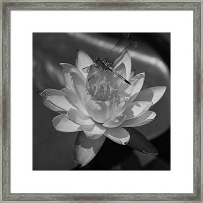 August In The Carolinas In Black And White Framed Print by Suzanne Gaff