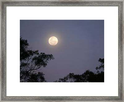 August Moon Framed Print by Evelyn Tambour