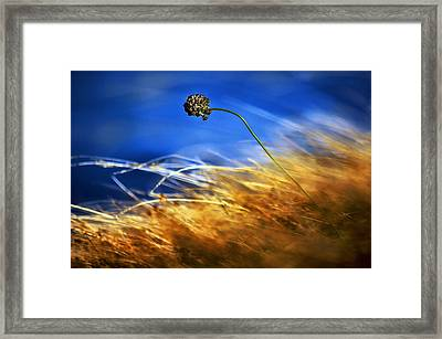 August Rush Framed Print