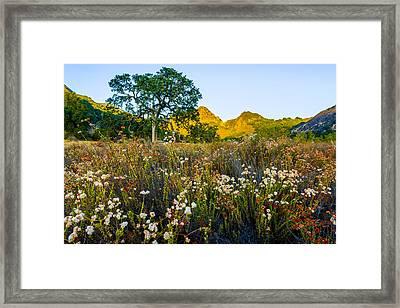 August Sunrise In Malibu Creek State Park Framed Print