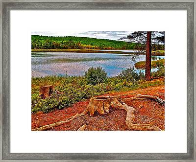 Aunt Betty Pond In Acadia National Park-maine  Framed Print by Ruth Hager