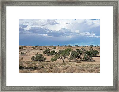 Auob Riverbed During The Rain Season Framed Print