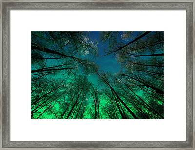 Aurora Glow Through The Birches Framed Print