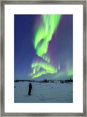 Aurora Watcher With Twilight Curtains Framed Print by Alan Dyer