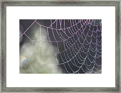 Framed Print featuring the photograph Aurora's Web by Cathie Douglas