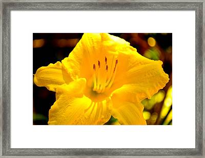 Aussie Gold Framed Print by Marty  Cobcroft