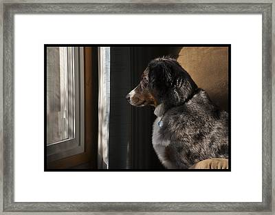 Aussie On Watch Framed Print by Ron Roberts