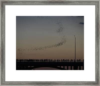 Austin Congress Bridge Bats Show Framed Print by Steven Ng