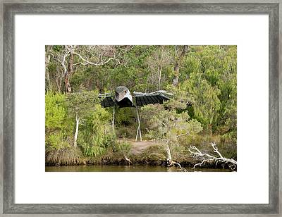 Australia, Albany, Kalgan River Framed Print by Cindy Miller Hopkins