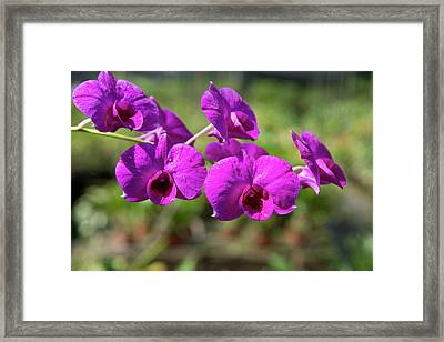 Australia, Northern Territory, Darwin Framed Print by Cindy Miller Hopkins