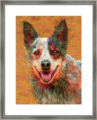 Australian Cattle Dog Framed Print by Jane Schnetlage